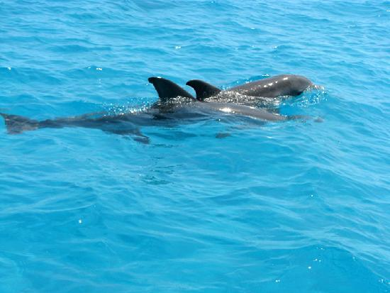 Sian Ka'an Biosphere Reserve: Dolphin spotting