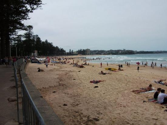 manley near sydney australia picture of manly