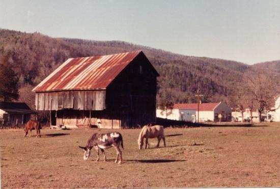 Horses and Donkey downtown Brandywine, WV 1981-1984
