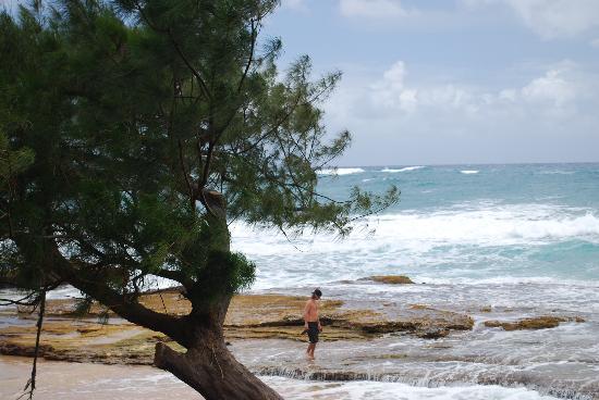 Kauai Photo Tours: Moloha Beach
