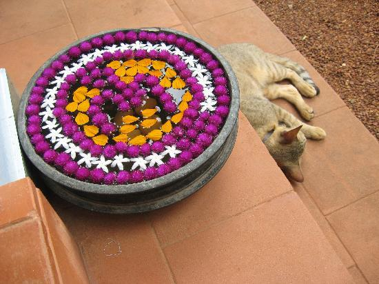 Villa Jacaranda: napping cat with flowers