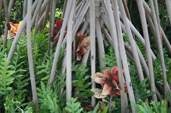 Hale Koa Hotel: Some of the plants on property