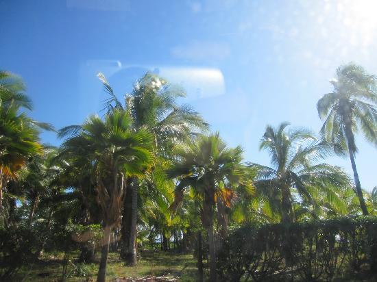 Kapuaiwa Coconut Grove / Kiowea Park: 大小のココナツの木々