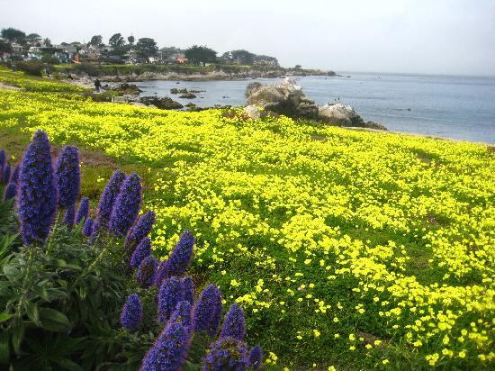 Pacific Grove walk path