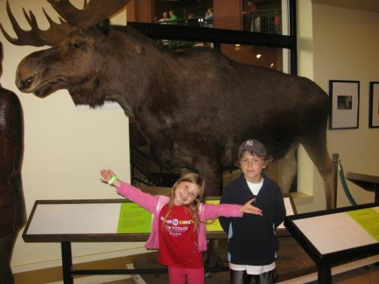 """The moose is this big!"" Museum in Saint John."