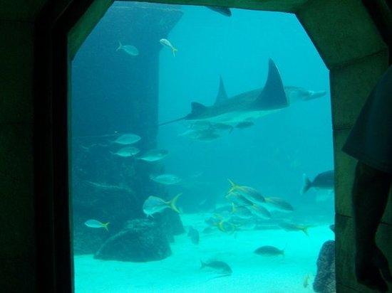 Bilde fra Vannparken i Atlantis Paradise Island