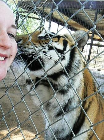 Midland, TX: Tiger licking Andi's cheek.