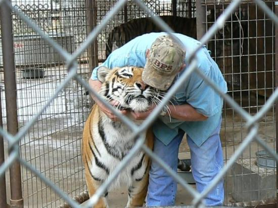 Midland (TX) United States  city photos : Midland, TX, United States My friend hugging a Tiger DonnaM29, mars ...