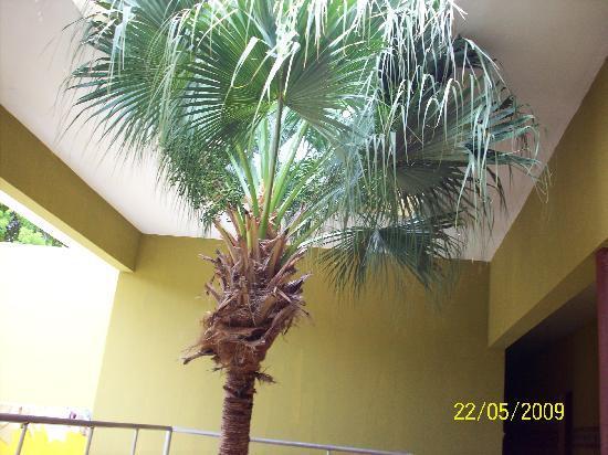 Hotel Guarocuya : Extraño este arbol esta dentro del hotel
