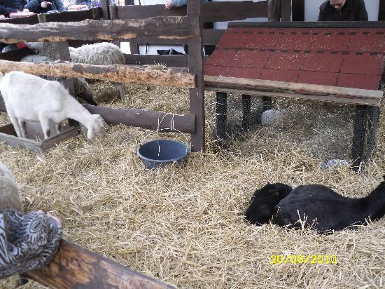 Dominican Hotel: Animals at Easter Market Old Town Square