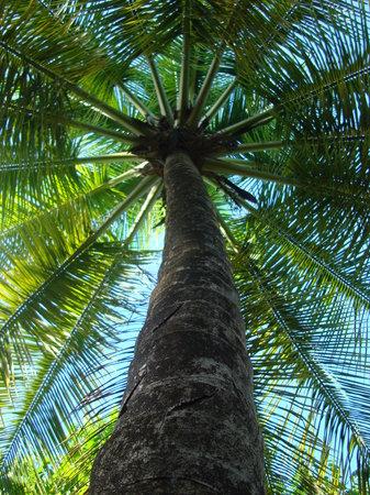 Sandals Halcyon Beach Resort: Paradise...