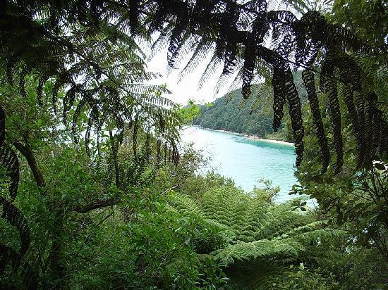 Bronte Country Estate: The walk along the Abel Tasman coast