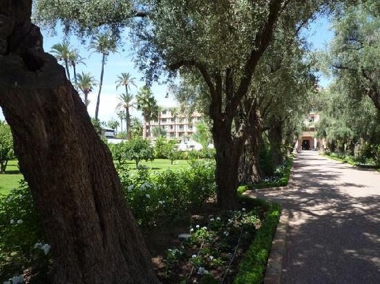 La Mamounia Marrakech: Les oliviers