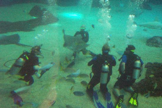 Maui Ocean Center dive in Shark Aquarium 2008