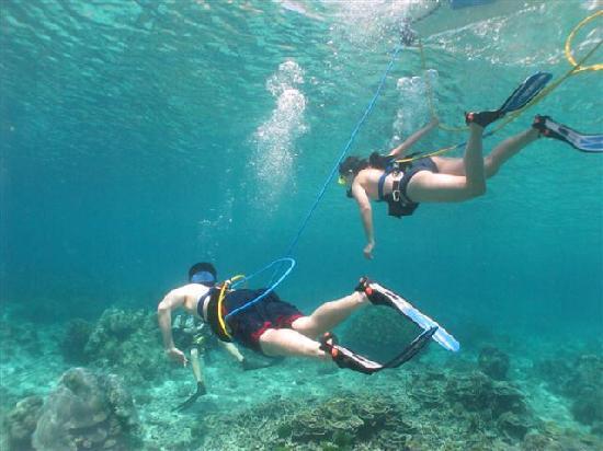 Aloha Ocean Adventures : picture taken by snuba