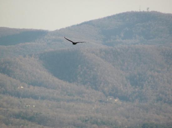 Blue Ridge Parkway ภาพถ่าย