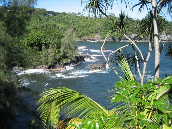 Hilo, HI: Just driving around taking in the beauty of the big island.
