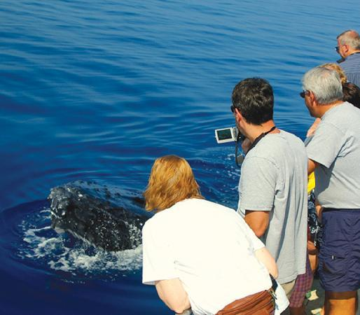PacWhale Eco-Adventures: See the whales with the experts at Pacific Whale Foundation.