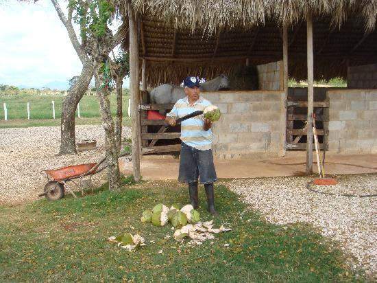 Xtreme-Buggy - Day Tours: Coconuts