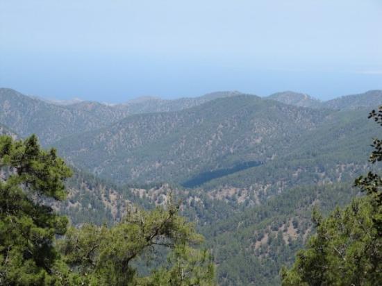 Polis, Chipre: cedar valley