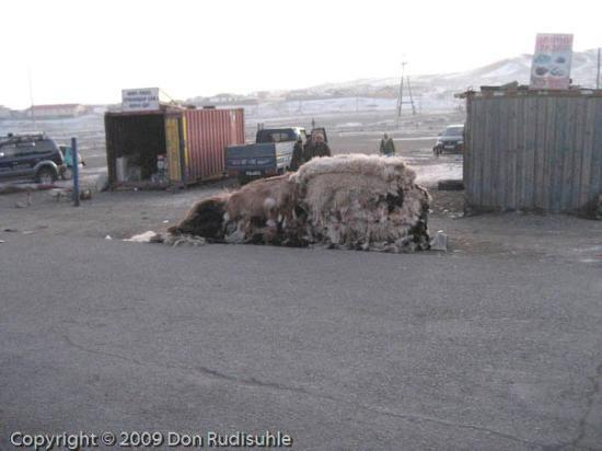 Arvayheer, Mongoliet: Freshly collected animal skins being readied for market  in Arvaikheer.