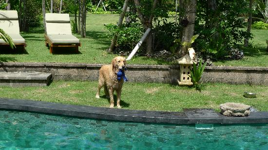 Villa Des Indes: Milo!! :)