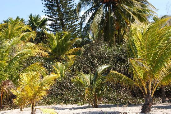 Caribbean Coral Inn : Beach