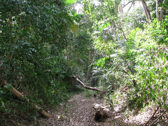 Saint Andrew Parish, บาร์เบโดส: Turner's Hall woods trail