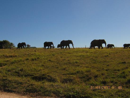Knysna Elephant Park: a lovely morning
