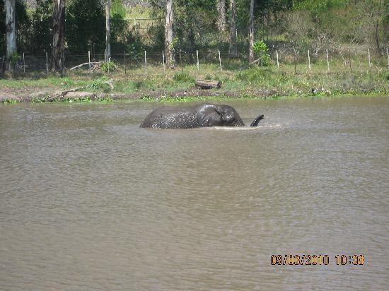 Knysna Elephant Park: i need to cool off