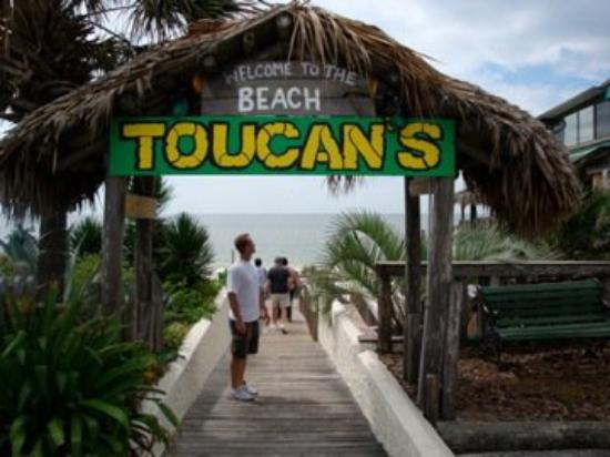 Toucan S On The Beach At Mexico