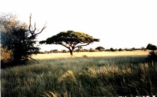Mbabane, Swaziland: Hwange National Park, Zimbabwe