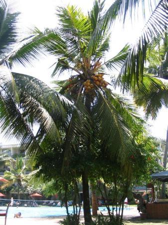 Eden Resort & Spa : pool