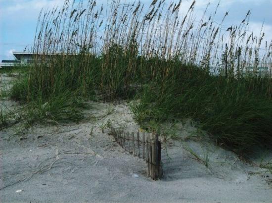 Bilde fra Atlantic Beach