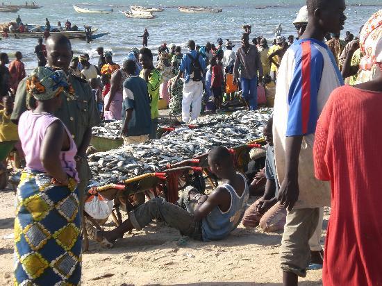 Kololi, Gambie : Tanji beach - landng & sorting fish