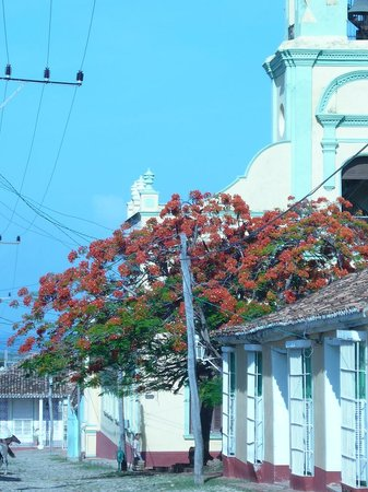 beautyfull detail of Trinidad