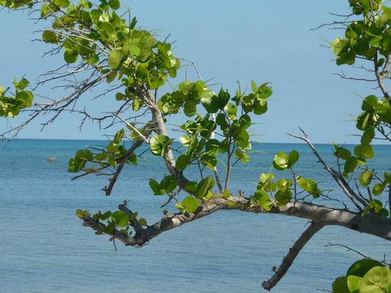 Vinales, Cuba : playa Jutias