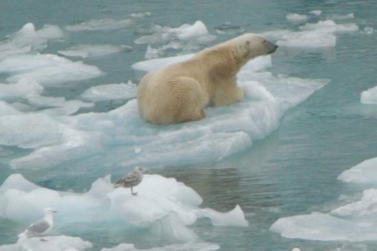 Longyearbyen, Norway: Celui là il est au pied du Glacier de Monaco (côte Ouest du Swalbard