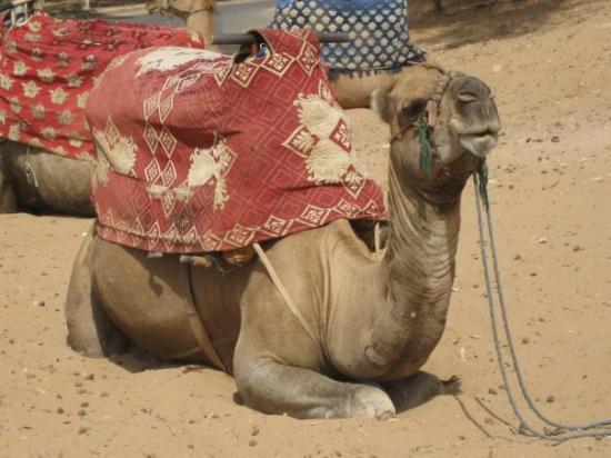 Bilde fra Agadir