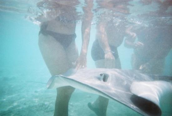 Bora Bora, Franska Polynesien: Feeding the Sting Rays