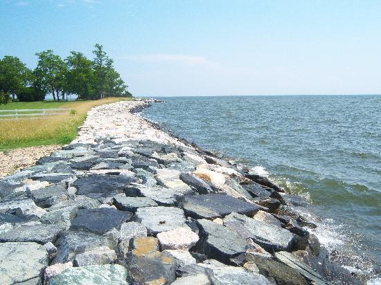St. Michaels, MD: View of the Bay shoreline