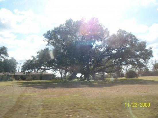 Carriere, MS: lots of trees and green grass even in december
