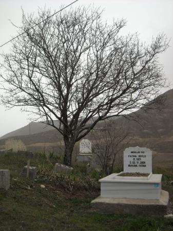Samsun Photo