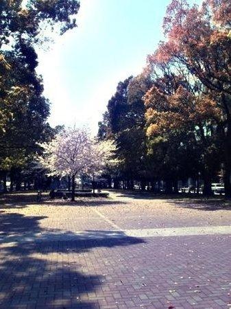 สวนโอโดริ