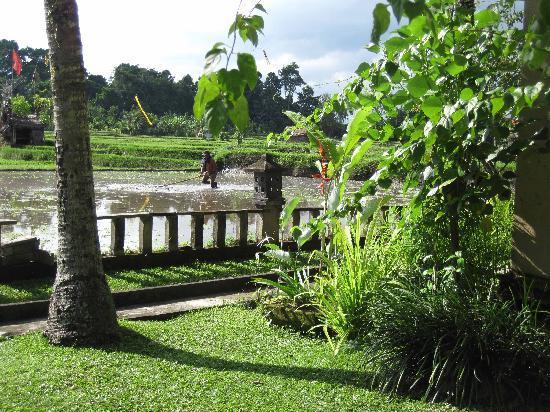 Bale Cahaya - rice paddy view from balcony
