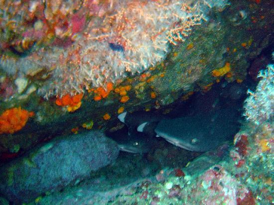Ocotal Beach Resort: Baby sharks in their lair.