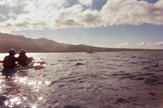 Kihei, HI: Whale sighting
