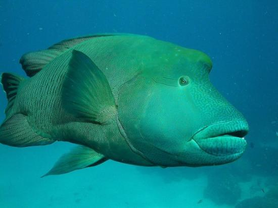 Blue Dive Port Douglas Photo