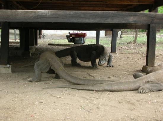 Bilde fra Komodo National Park