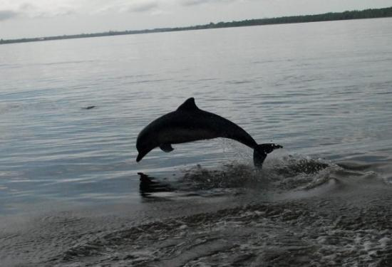Paramaribo, Surinam: !00 pictures, finally one with a dolfin on it and not just water
